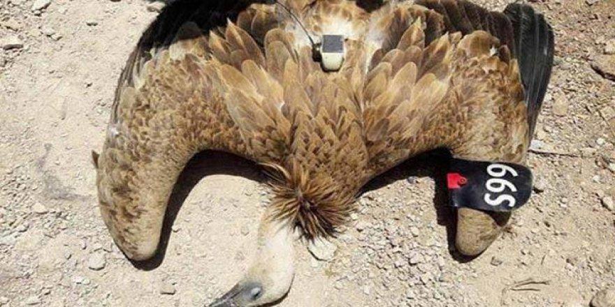 İsrail'in Casus Kuşu Yakalandı