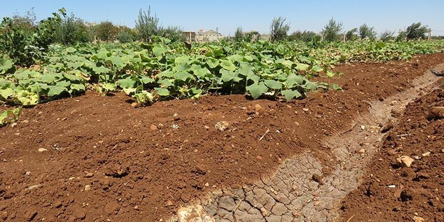 Esed'in Kuşatması Humuslu Çiftçileri Vurdu!