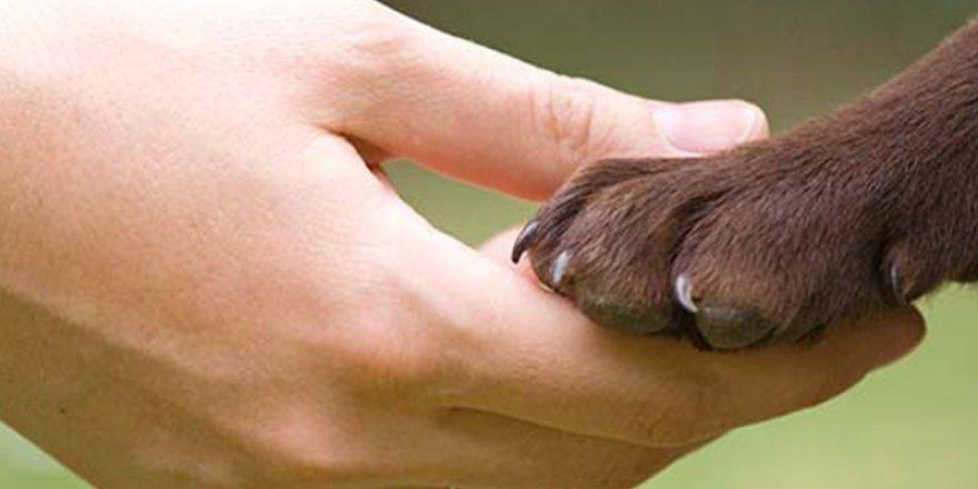 Hayvan Sevgisi mi, İnsanın İnsana Yabancılaşması mı?
