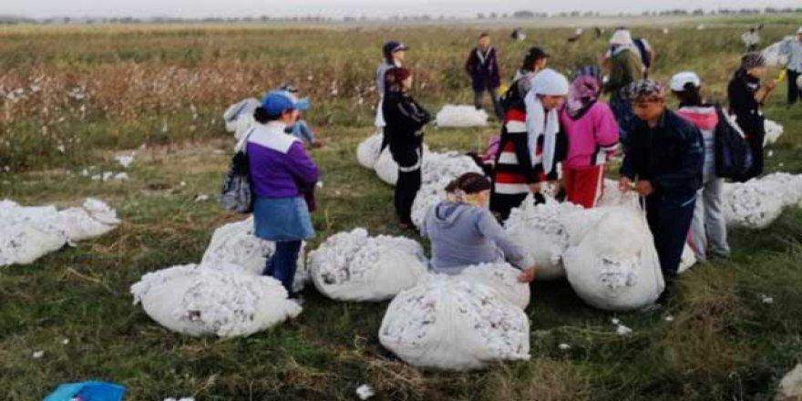 Özbekistan'da Zorla Çalıştırmaya Son Verildi