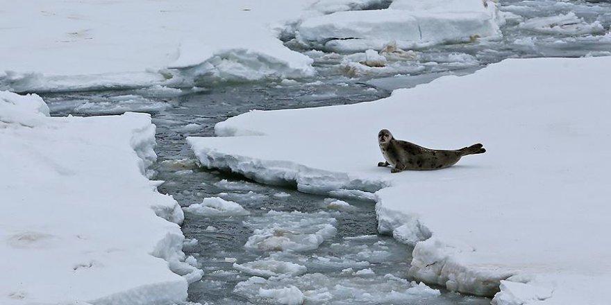 Buzulların Erime Riski Tahminlerin Ötesinde