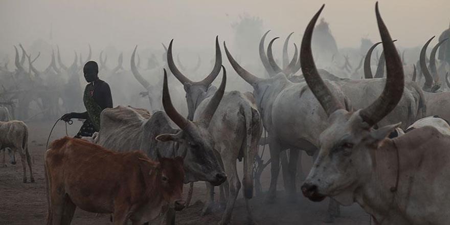 Güney Sudan'da Sığır Hırsızları Kabileye Saldırdı: 40 Ölü!