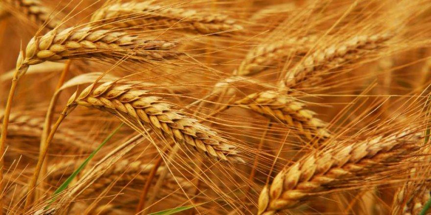 Türkiye'den Lübnan'a 400 ton buğday yardımı