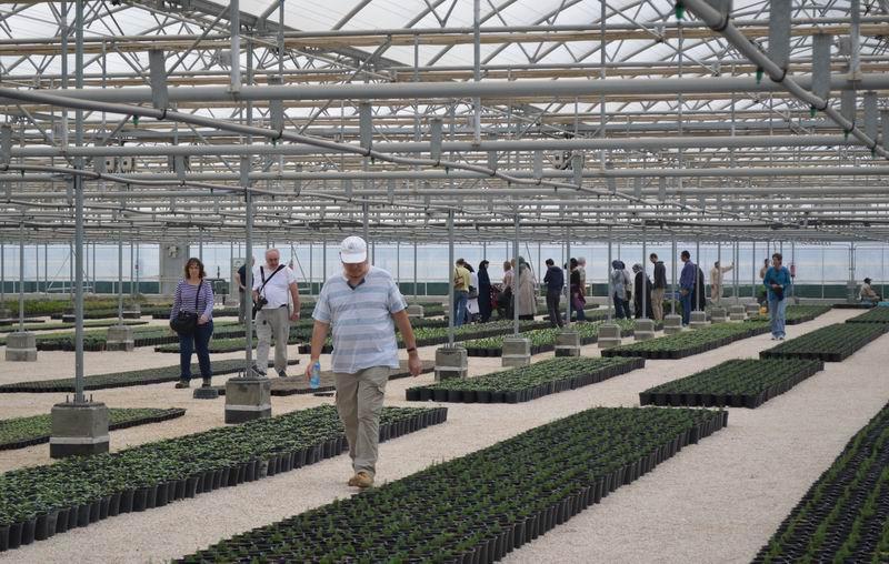 Katar'da Kur'an Botanik Bahçesi Kuruldu