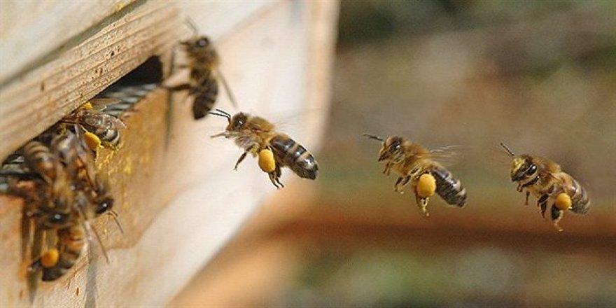 Arı Ölümleri Üreticileri Endişelendiriyor