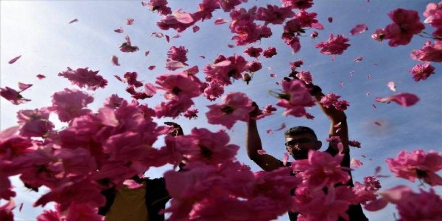 Isparta Güllerinin Hasadı Başladı