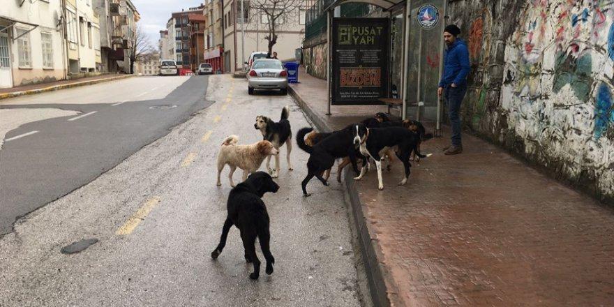 Köpeklerin Saldırdığı Kadın Öldü