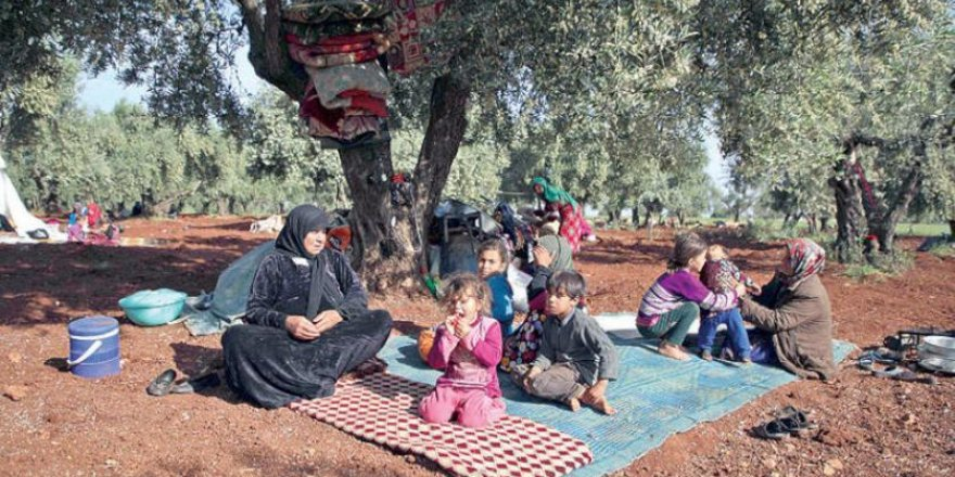Onurlu Bir Direnişin Şahidi Zeytin Ağacı
