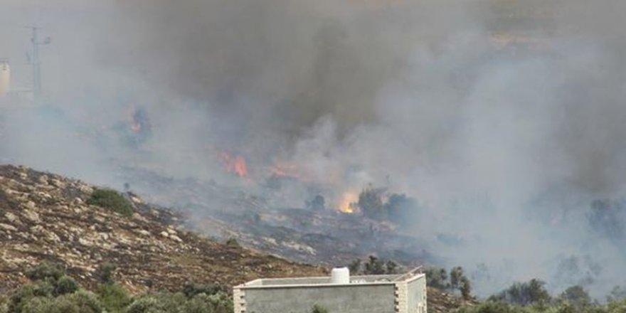 İşgalciler Filistinlilere Ait 1000 Zeytin Ağacını Yaktı
