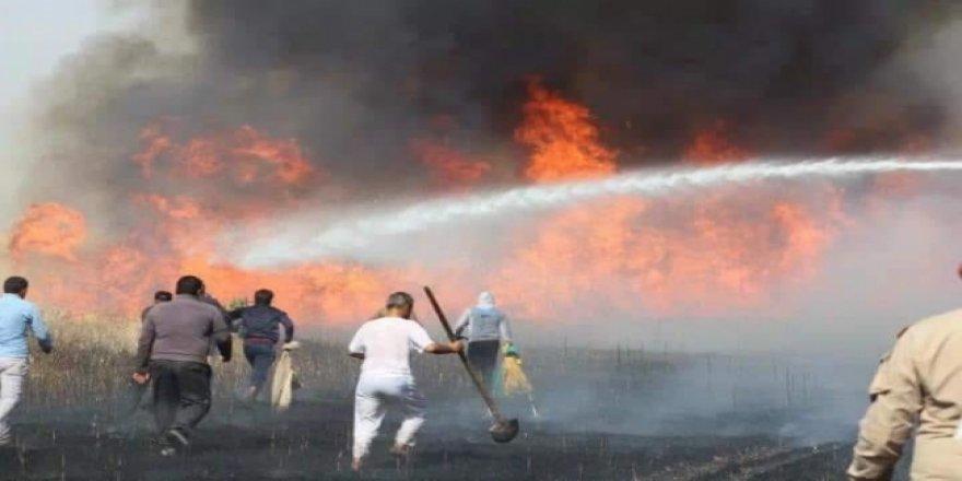 YPG/PKK, Tarım Arazilerinde Yangın Çıkardı