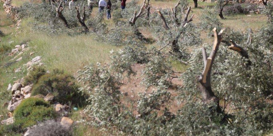 İşgal Güçleri Filistin'de 2,5 Milyon Ağaç Söktü