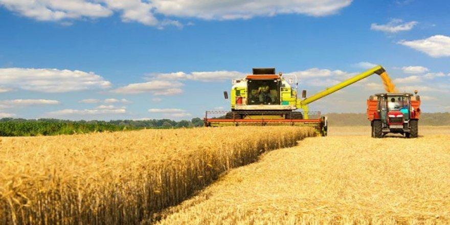 Tekirdağ'da Buğday Bereketi