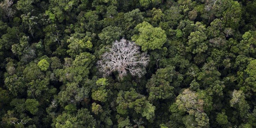 Amazonlardaki Orman Tahribatında Yüzde 278 Artış