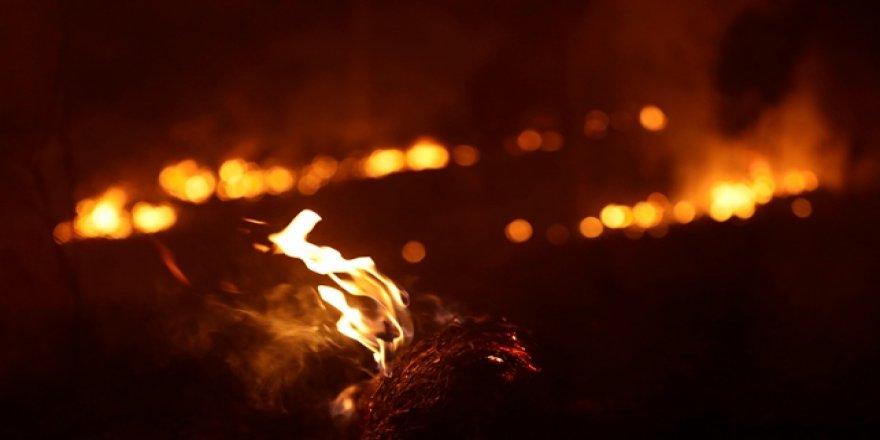 Amazonlar'da Yangın Yoğunluğu Rekor Düzeye Ulaştı