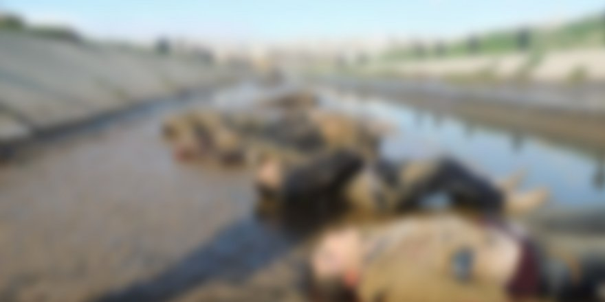 Halep 'Şehitler Nehri' Katliamının 7'nci Yılı