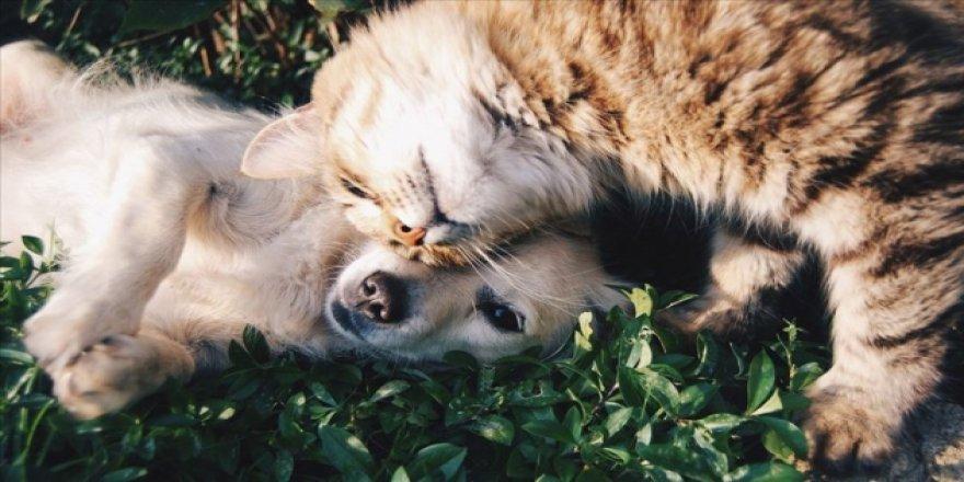 Sokak Hayvanları İçin 81 İle Genelge: Yem ve Su Bırakılacak