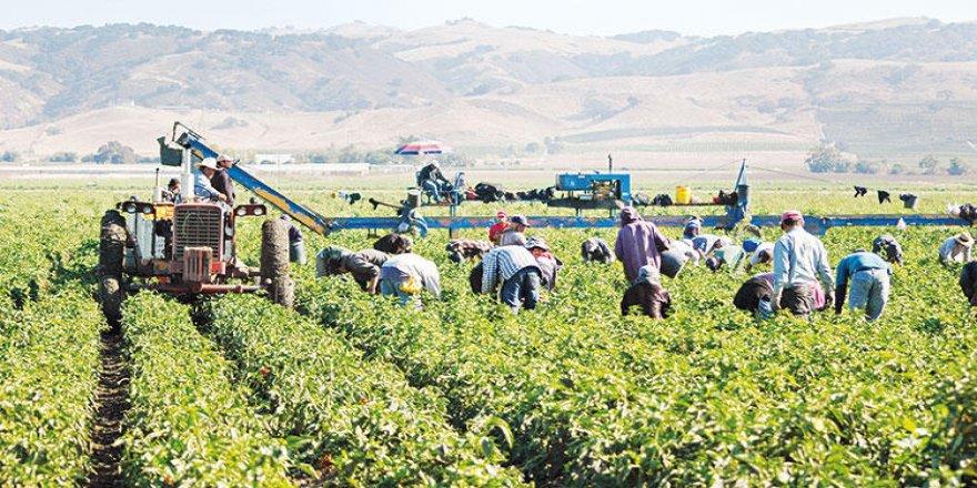 Ziraat Odaları Tarım İşçilerini Açlık Sınırına Mahkum Etmek Üzere (mi) Anlaştılar!