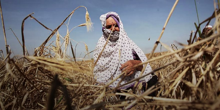 Küresel namlunun ucundaki tarım