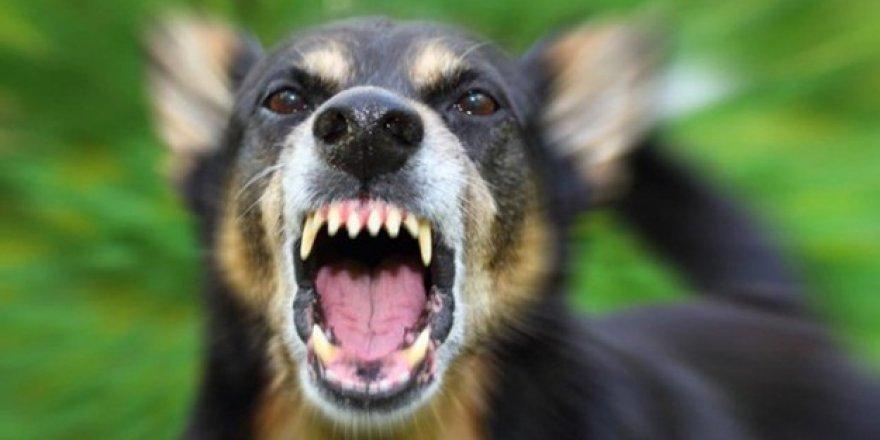 Başıboş köpekler, Hakkari'de 3 Keçi ve 72 Tavuğu Telef Etti