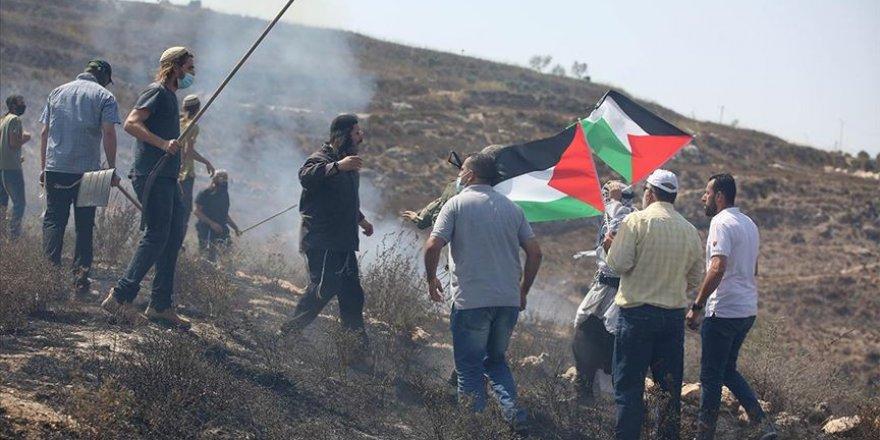 Yahudi yerleşimciler Filistinlilere ait onlarca zeytin ağacını söktü