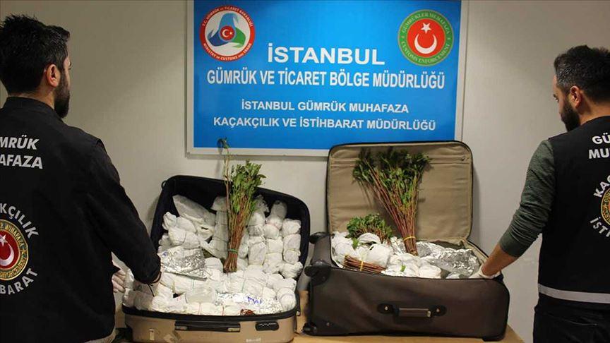 İstanbul Havalimanı'nda 'khat' cinsi uyuşturucu ele geçirildi