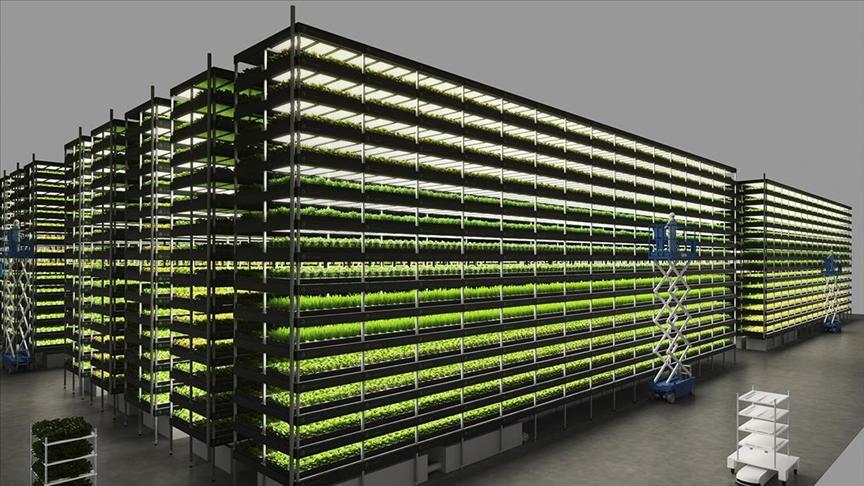Danimarka'da 14 katlı 'dikey tarla' ile yılda 15 defa hasat yapılacak