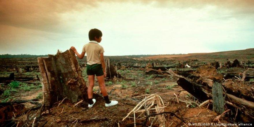 Her yıl Danimarka büyüklüğünde yağmur ormanı yok oluyor