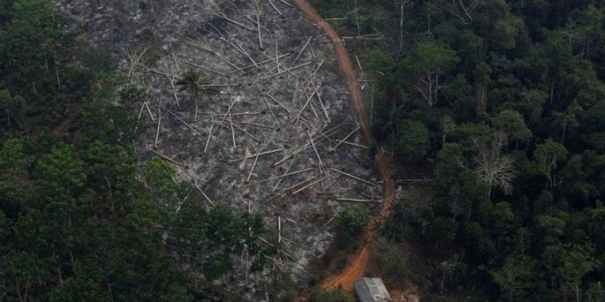 Amazon'da yasa dışı ağaç kesimi yapması Brezilya Çevre Bakanının koltuğuna mal oldu