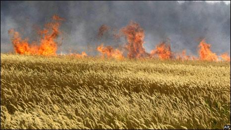 Ekinleri Yanan Rusya Tahıl İhracatını Durduruyor