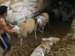 Bayram Gazzeli Fakirleri Sevindirdi