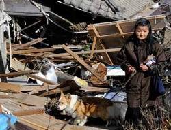 Japonyada Ölü Sayısı Artıyor