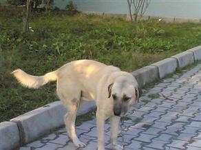 İsrailde Bir Köpeğe 'Recm' Cezası