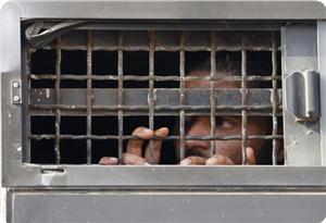İsrail Zindanlarındaki Filistinli Esirlerle Dayanışma