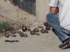 Ankarada El Bombaları Bulundu