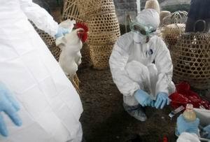 Çinde Kuş Gribinden Ölenlerin Sayısı Artıyor