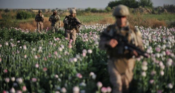 Afganistan'da Afyon Üretimi Rekor Seviyede