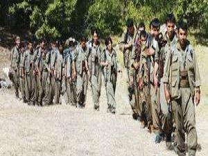 Şırnak'ta 15 PKK'lı Teslim Oldu