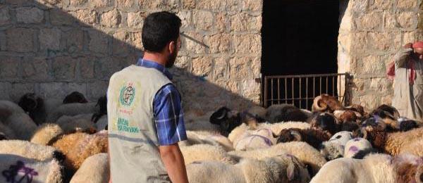 İHH, Suriye'de Bin Kurban Kesecek