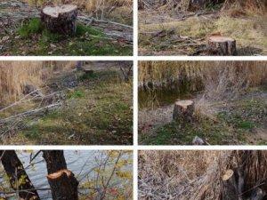 ODTÜ'den Restoran İçin Ağaç Katliamı(!)