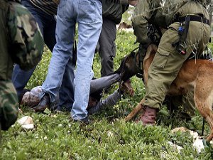 Köpekli İşkenceye Soruşturma Açıldı