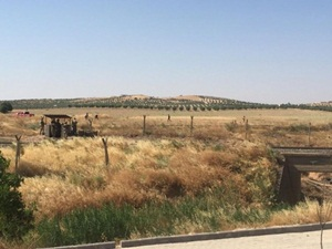 IŞİD Suriye Sınır Hattına Mayın Döşedi