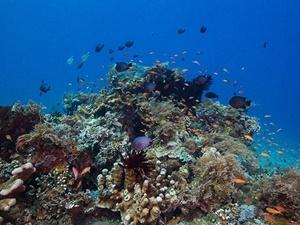 Okyanuslardaki Gıda Zinciri Bozulma Tehlikesi Altında!