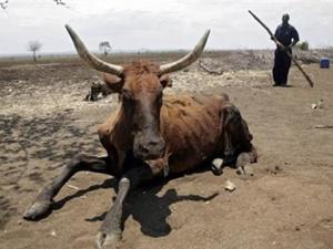 """""""Afrika'nın Güneyinde 14 Milyon İnsan Açlıkla Karşı Karşıya"""""""