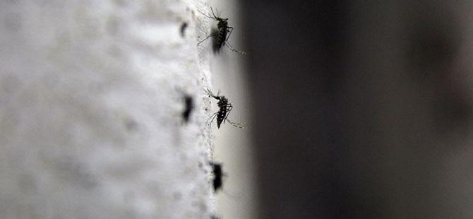 Singapur'da İlk Zika Virüsü Vakası