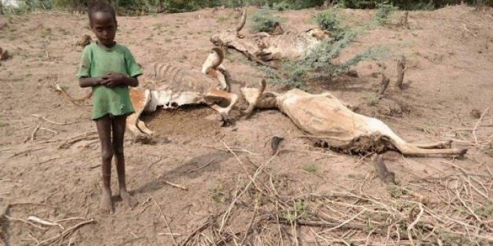 Etiyopyalı Müslümanlar Açlıktan Ölmeye Başladı