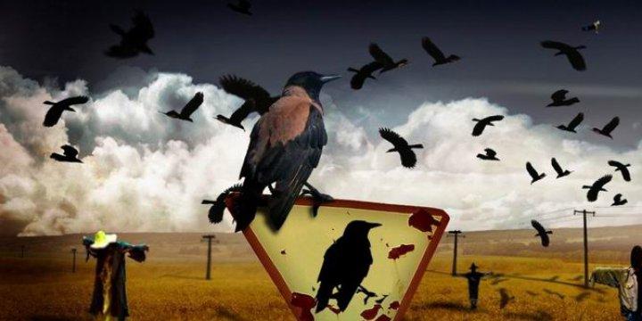 Devekuşu Mantığının Kuşdili Muhalefeti