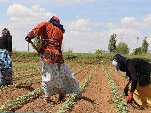 Su Geliyor, Üretim Artıyor Ama Tarım İşçiliğinde Değişen Bir Şey Yok