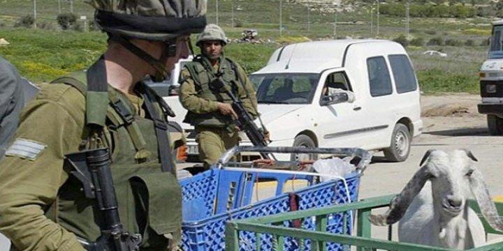 Siyonist İsrail Askerleri Keçileri Çaldı