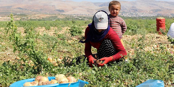 Mevsimlik Tarım İşçileri İçin Geçici Yerleşim Alanları Oluşturulacak