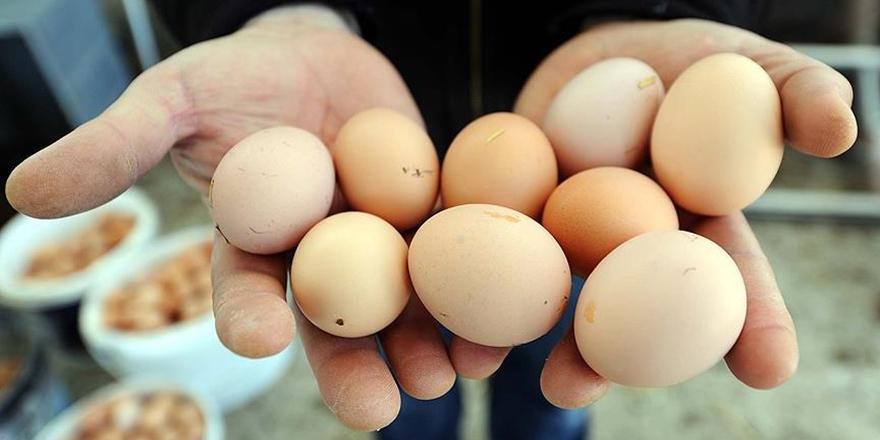 Yumurta Fiyatları Düştü, Tavuk Fiyatları Yükseldi!